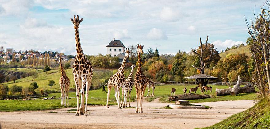 zoopark praha